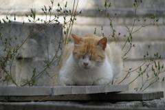 Matera i kot. Foto: Piotr Maculewicz