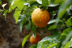 ...pomarańcze,... Foto: Andrzej Borzym