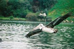 Chile 2001 -  Valdivia