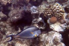 Egipt 2004