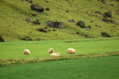 ...owce. Foto: Anna Potapowicz
