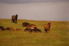 ...na wpół dzikie, mocne i zahartowane,... Foto: Anna Potapowicz