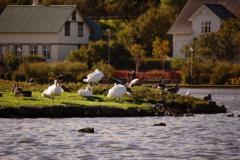 ...Tjörnin - miejskiego jeziora. Foto: Anna Potapowicz
