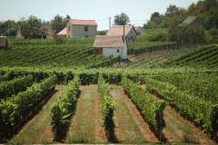 Wybraliśmy się z Peczu na południe, w stronę wzgórz Villány, jednego z najważniejszych regionów winiarskich na Węgrzech. Fot. Anna Potapowicz