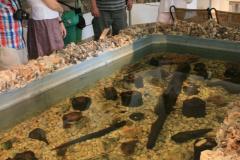 …odtworzony na podstawie zachowanych w wodzie reliktów osady z XII w. p.n.e. Fot. Agnieszka Sawinda