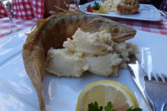 Może zjemy rybeńkę – ten sandacz pewnie jeszcze wczoraj pływał w Dunaju. Fot. Iwona Januszkiewicz-Rębowska