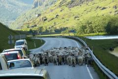 Następnego dnia rano: korek na drodze do Bergen. Foto: Ancja Łabuszewska