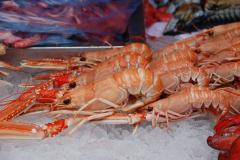 Krewetki, langusty, homary i kraby to domena mórz chłodnych… Foto: Andrzej Borzym
