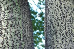 Drzewa Sycylii. Fot. Anna Potapowicz