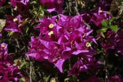 Kwiaty Sycylii. Fot. Artur Mikołajewski