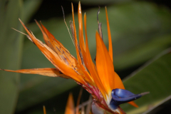 Kwiaty Sycylii. Fot. Anna Potapowicz