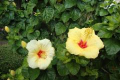 Kwiaty Sycylii. Fot. Klaudia Kalita