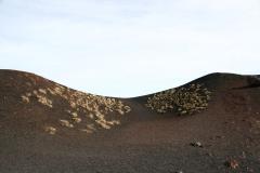 Ziele na kraterze. Fot. Piotr Boratyński