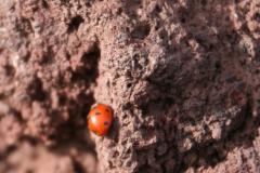 Życie na kraterze. Fot. Piotr Boratyński